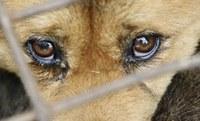 Plenário decide manter punição administrativa para quem maltratar cães e gatos